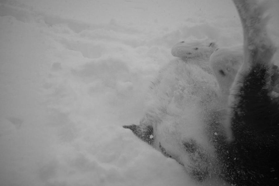 Snow roll!!