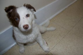 Baby Maya!! Love those eyes!